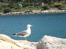 Gull in the foreground Royalty Free Stock Images
