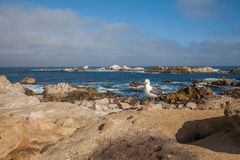 Gull Guarding the Coast Royalty Free Stock Photography