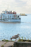 Gull on the Gulf of Finland Stock Photography