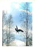 Gull. Bird fly Stock Image