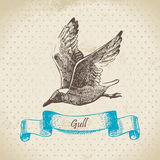 Gull. Hand drawn retro illustration Royalty Free Stock Image