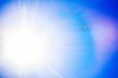 Gull il volo nel cielo blu, fondo di Cormorant della natura immagini stock