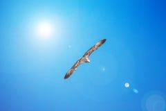 Gull il volo nel cielo blu, fondo di Cormorant della natura fotografie stock