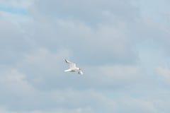 Gull il volo in un cielo nuvoloso di estate fotografia stock libera da diritti