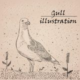 Gull ink illustration on the white background. royalty free illustration