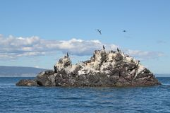 Gull Island in the sun Royalty Free Stock Photography