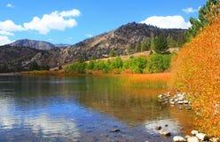 Free Gull Lake Stock Photography - 61178512