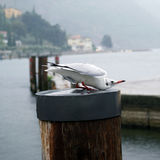 Gull at lake Stock Photography