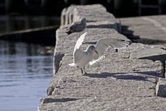 Gull Landing Granite Seawall Stock Image