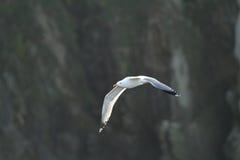gull legged желтый цвет Стоковые Изображения