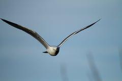 gull legged желтый цвет Стоковое фото RF