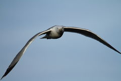 gull legged желтый цвет Стоковые Фото