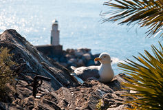 The gull and the lighthouse Stock Photo