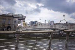 Gull looking at Ha`penny Bridge over Liffey river in Dublin, Ireland Stock Image