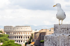 Gull on the outlook in Rome Royalty Free Stock Images