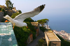 Free Gull Over Gibraltar Royalty Free Stock Image - 21077836