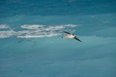 Gull over ocean in Mexico Stock Photos