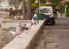 Gull pavement Royalty Free Stock Images