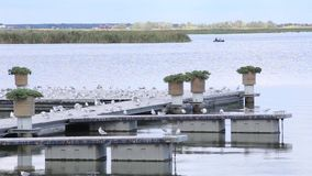 Gull On Pier. River pier in windy weather stock footage
