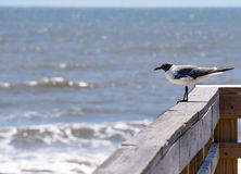 Gull on a railing near the ocean Stock Images