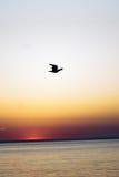 Gull Stock Images