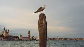 Gull Resting on Post by Coastal Town Stock Photography