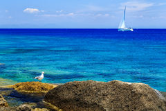 Gull on the rocks near the shore against the sea and beautiful yacht Stock Photography