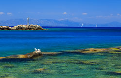 Gull on the rocks near the shore against sea and beautiful yacht Stock Photography