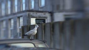 Gull Stock Image