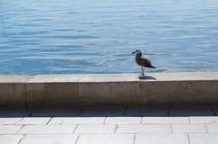 Gull on the sea promenade Stock Photo
