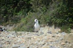 Gull stock photos