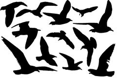 Gull. Set of black silhouettes of gull  Isolated on white background Stock Image