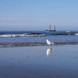 Gull and ship at the beach Stock Photos