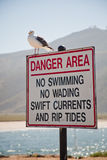 Gull On a Sign Stock Photos