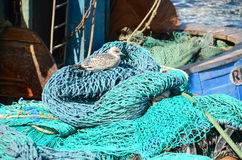 Fishing nets and equipment. A gull sitting on a pile of fishing nets and equipment on a boat Royalty Free Stock Photos
