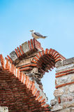 Gull sitting on Ruined Church of the Holy Archangels Michael and Gabriel in the Bulgarian town of Nesebar on the Black Royalty Free Stock Image