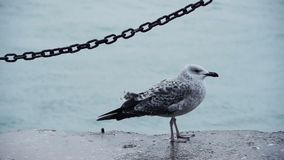 Gull sitting at water's edge stock footage