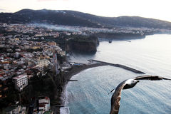 Gull in sorrento. A sea gull on the sorrento coast in italy stock photography