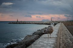 Gull. Spanish sunset landscape. Seagull in the port. Estepona, Malaga province, Andalusia, Spain Stock Photography