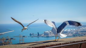 Gull spreading their wing, looking to the sea before taking their flight. stock photo