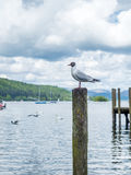 Gull stand on pole Royalty Free Stock Photos