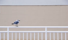 Gull Standing on a Railing Stock Photos