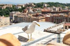 Gull sul centro storico di vecchia città Il gabbiano controlla i tetti di Roma fotografia stock