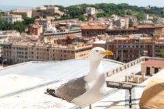 Gull sul centro storico di vecchia città per la stampa fotografia stock libera da diritti