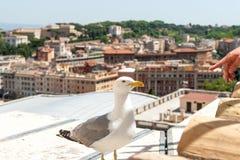 Gull sul centro storico di vecchia e città umana della mano per la stampa immagini stock libere da diritti