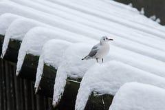 Gull sulla barriera di legno prima di Lavka, ponte di Charles immagine stock