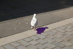 Gull sulla via con ombra sull'asfalto immagine stock
