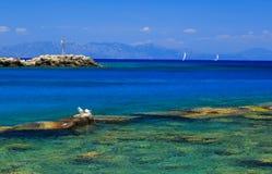 Gull sulle rocce vicino alla riva contro il mare ed il bello yacht fotografia stock