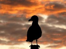 Gull at Sunset Stock Image