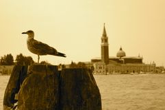 Gull In Venice Royalty Free Stock Image